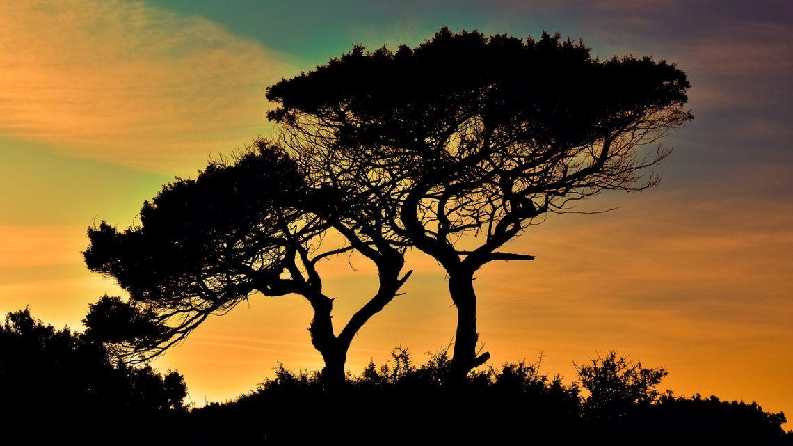 Pourquoi est-ce essentiel de prendre soin des arbres ?